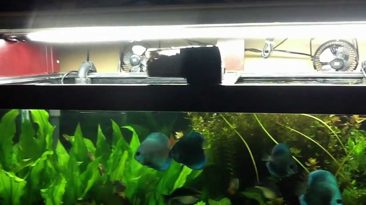 eheim everyday automatic fish feeder instructions