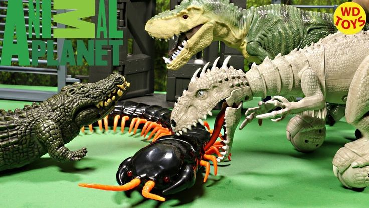 animal planet centipede instructions