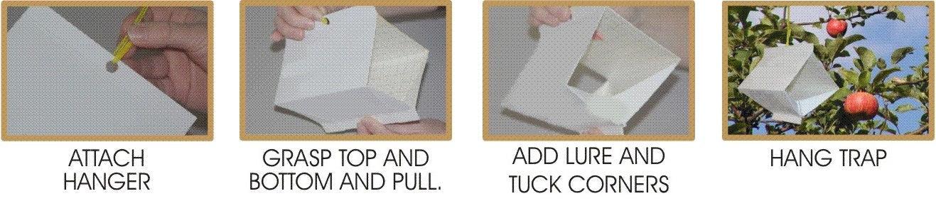 biocare earwig trap instructions