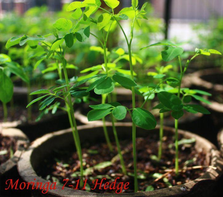plant prod ultimate 30-10-10 instructions